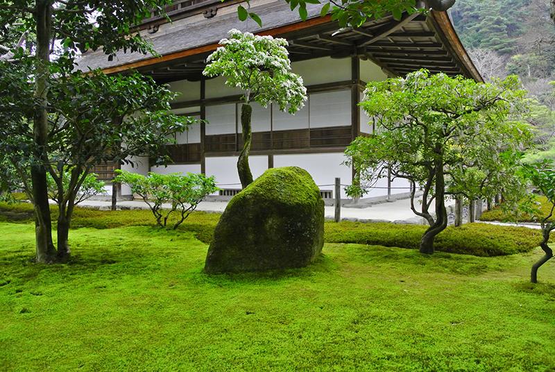 京都銀閣寺:あざやかないろどりの苔と岩 - -京都市左京区哲学の道周辺- -