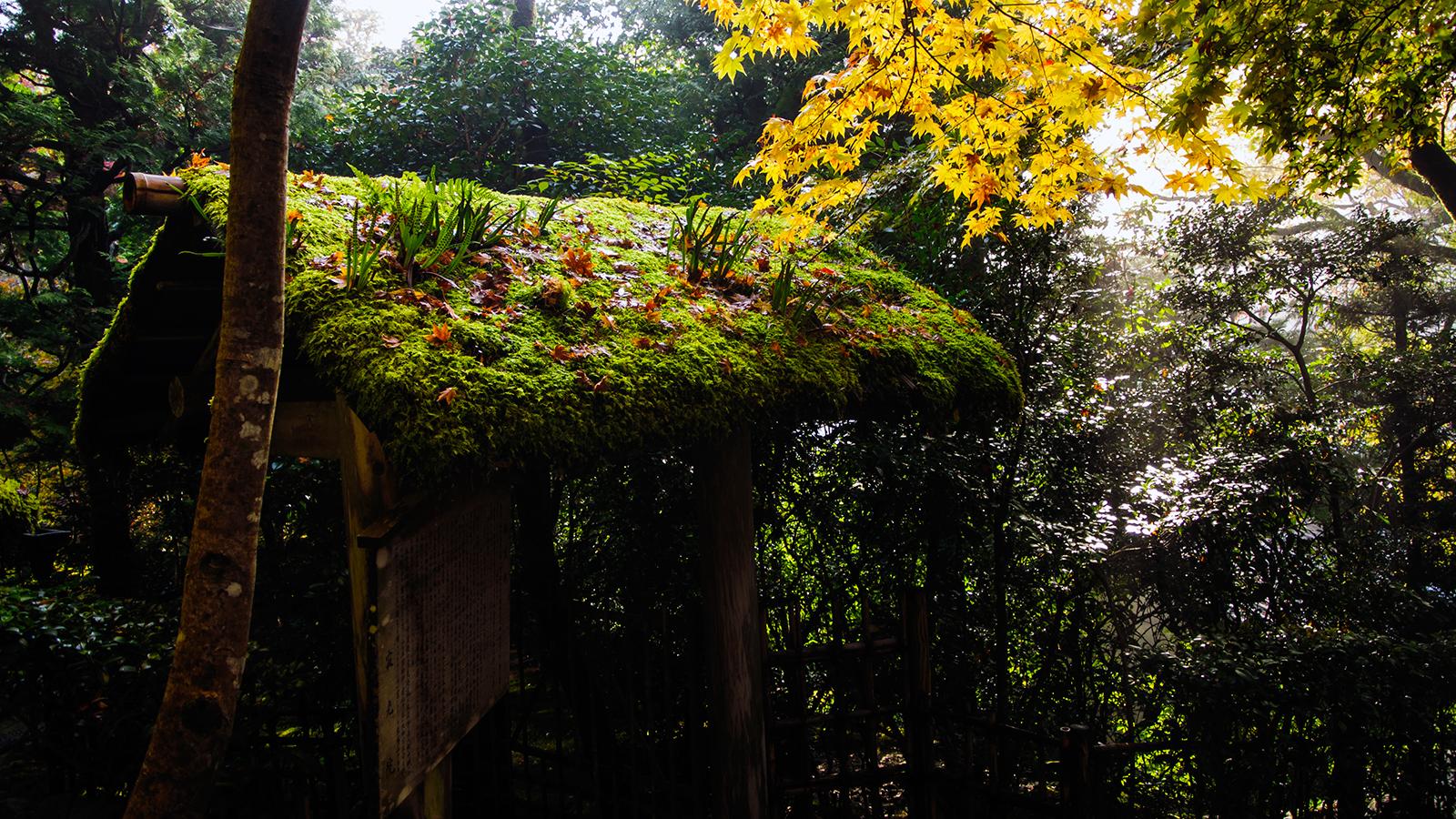 京都大原の寂光院:諸行無常の寺、苔ともみじと明と暗 - -京都市左京区大原- -