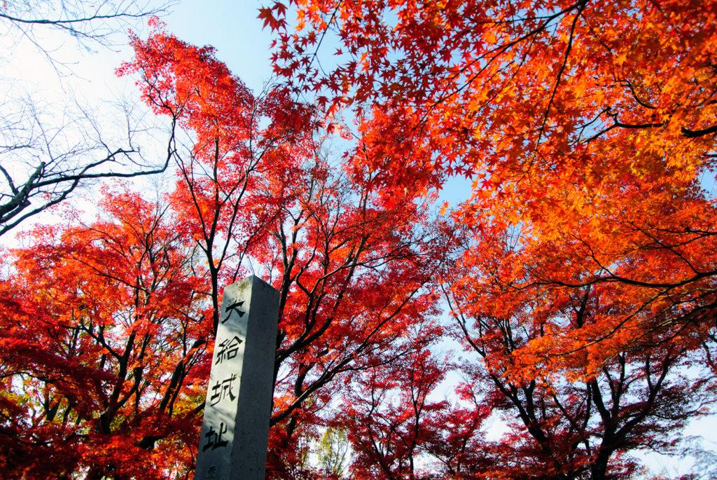 大給城址では鮮やかなもみじをひとりじめ - -愛知県豊田市松平郷- -