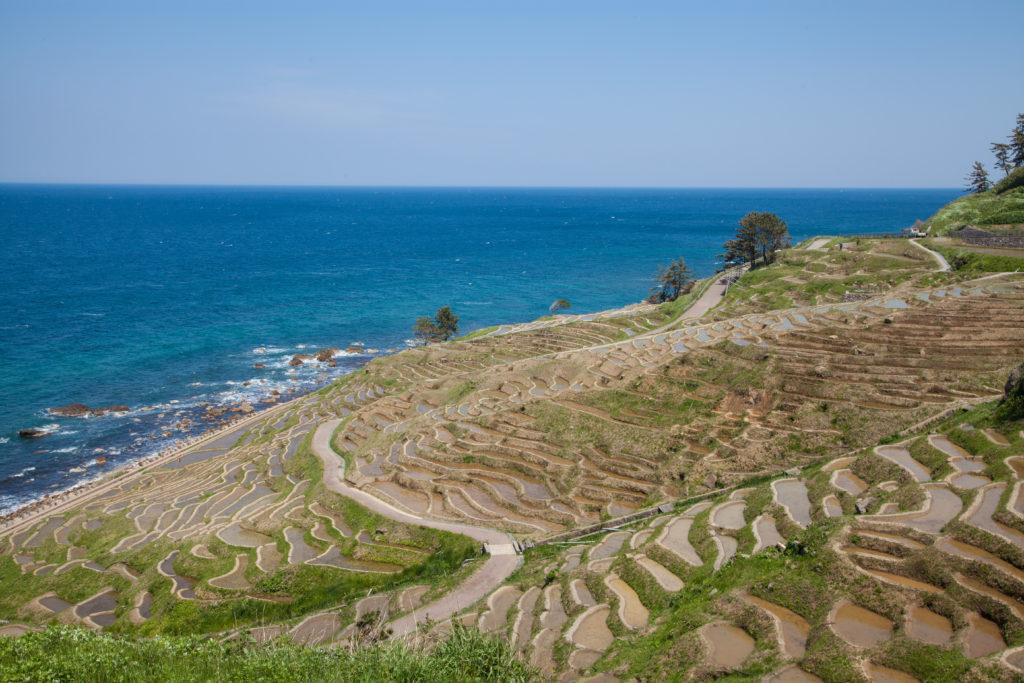 日本海へ向かって織り成す棚田の風景 - -石川県輪島市:白米千枚田- -