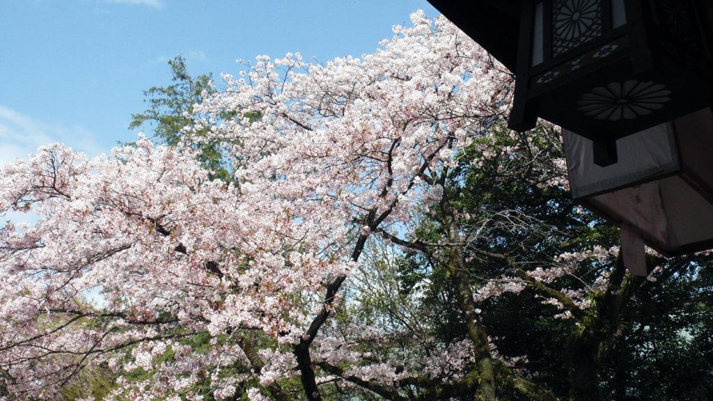 桜の名所としても名高い浅間大社 - -富士宮市:富士山本宮浅間大社- -