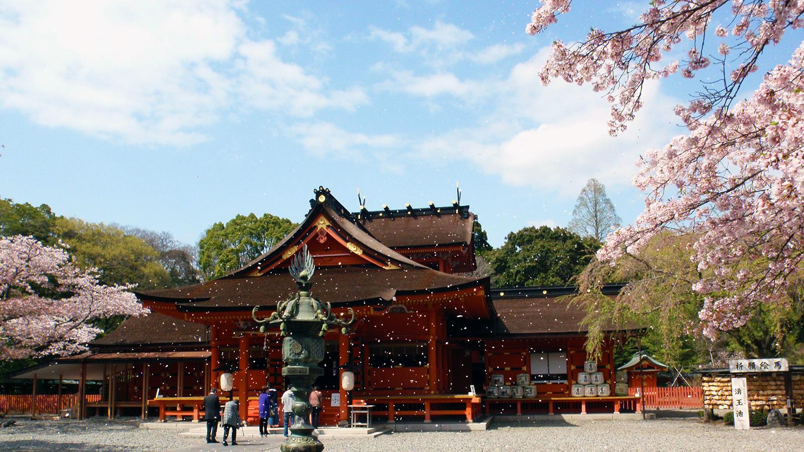 さくらの花びらが舞う富士山本宮浅間大社 - -富士宮市:富士山本宮浅間大社- -
