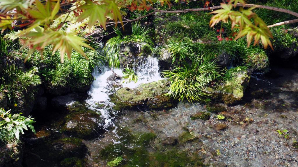 清涼なる御神水が湧き出る湧玉池 - -富士宮市:富士山本宮浅間大社- -