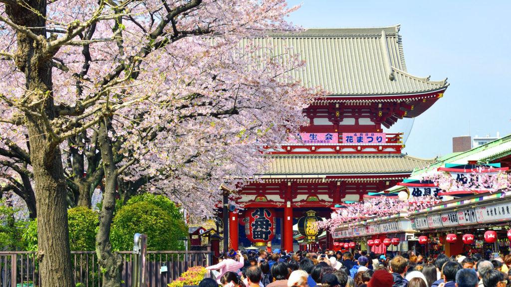 華やかなサクラの花に彩られた仲見世通り - -東京:浅草寺- -