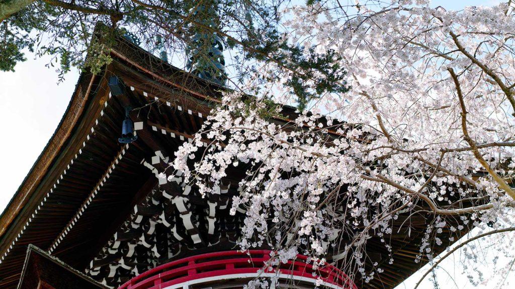 春の桜と多宝塔 - -奈良県吉野町- -