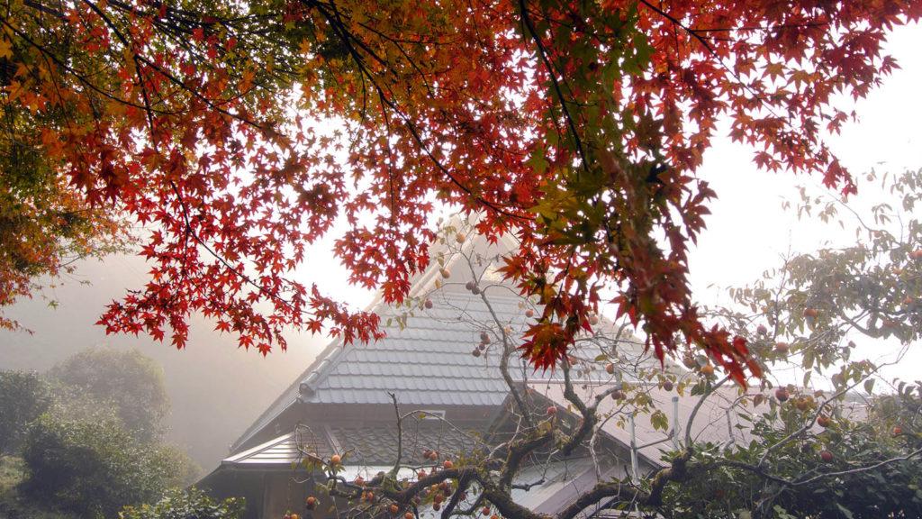 霧に包まれるもみじと大原の里 - -京都、大原- -