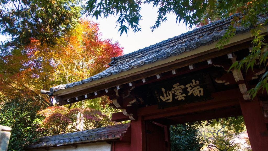 秋、紅葉した楓と山門の風景 - -愛知県の観光、撮影スポット:本光寺- -