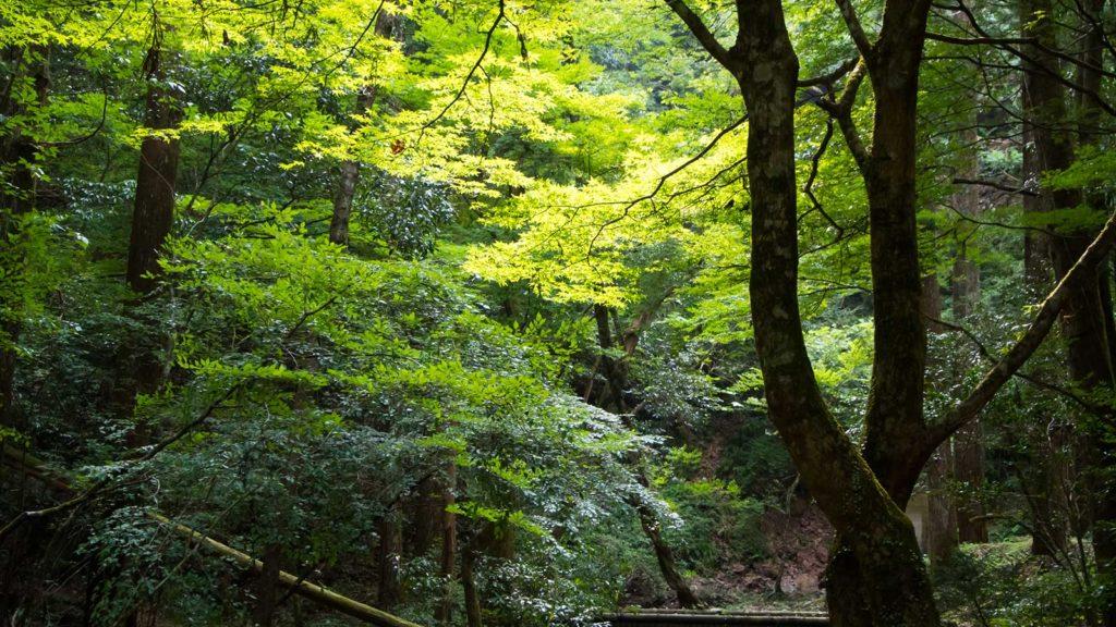 光に照らされ真新しい緑の木々も秋には錦に染まる  - -愛知県の観光、撮影スポット:阿寺の七滝- -