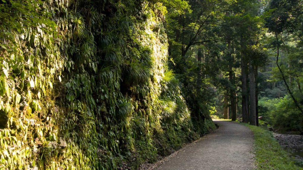 阿寺の七滝へ向かう途中、振り返れば緑の中をすすむ道が伸びる  - -愛知県の観光、撮影スポット:阿寺の七滝- -