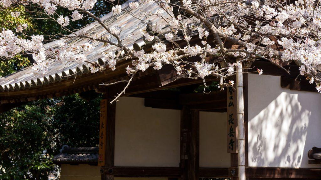 春には大門とともに桜の花が訪れる人を出迎える長岳寺 - -奈良県天理市にある観光、撮影スポット- -