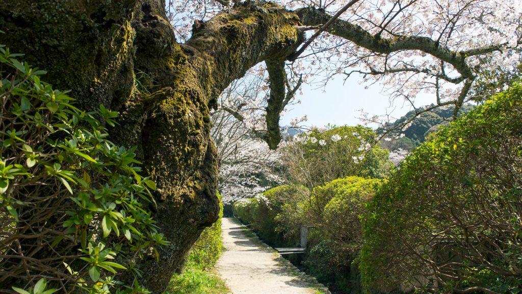 参道や境内にはツツジの株が生えそろい、シーズンには華やかさも増す長岳寺 - -奈良県天理市にある観光、撮影スポット- -