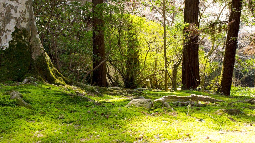 広い境内には苔の美しい緑を愉しめるスポットも!日本庭園の美しさを堪能できる長岳寺 - -奈良県天理市にある観光、撮影スポット- -