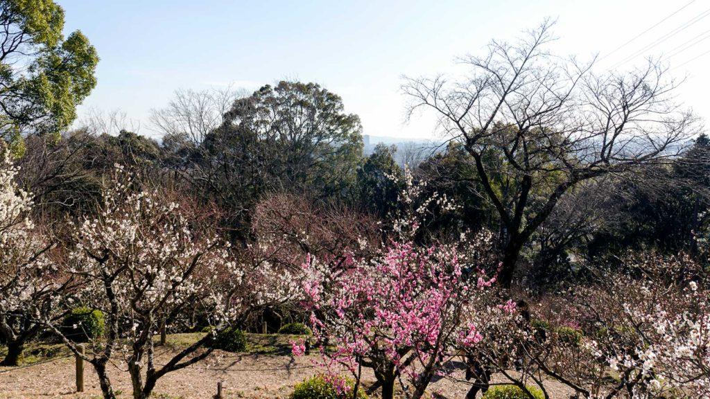徳川家康の生まれ故郷、岡崎の市街を望む東山梅苑からの眺め - -愛知県岡崎市:岩津天満宮- -