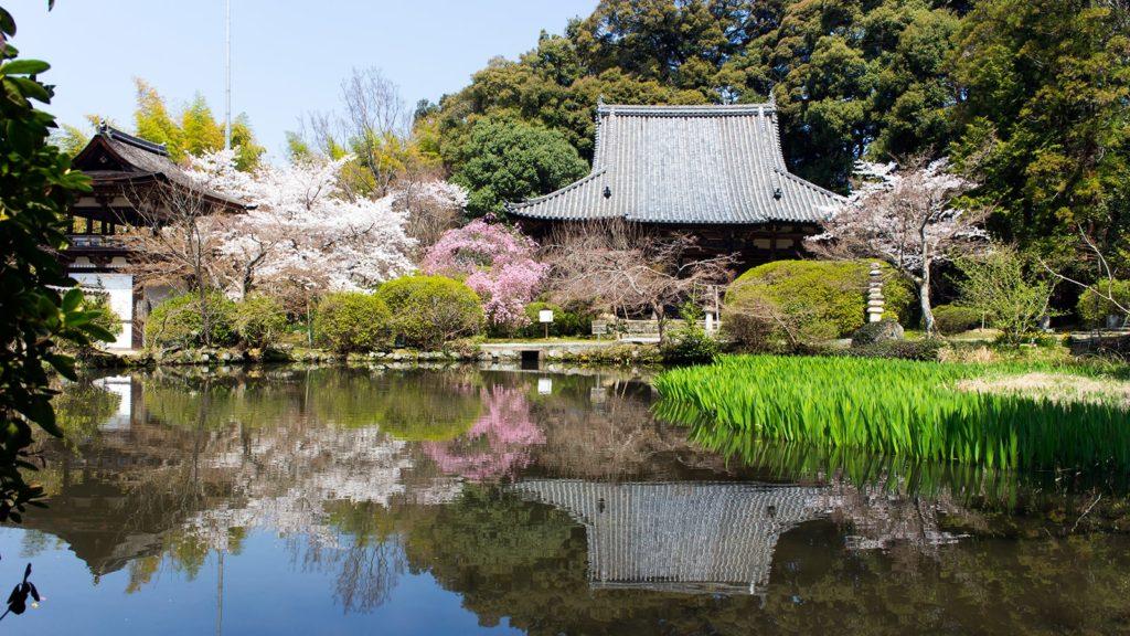 ツツジ、カキツバタ、桜、カエデと放生池の周りには四季によって彩を添える木々がたくさん - -奈良県天理市にある観光、撮影スポット:長岳寺- -