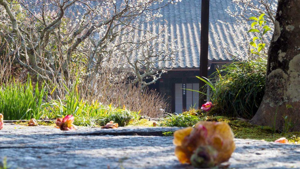 本堂前、石畳のみちにおちた椿の花 - -愛知県の観光、撮影スポット:本光寺- -