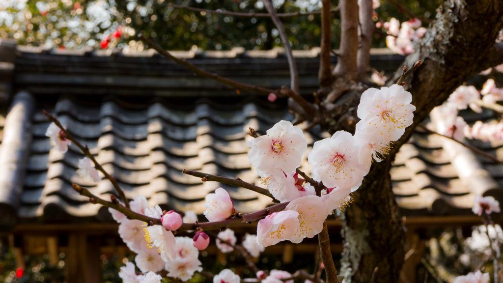西廟所も梅の花、あじさいなどでいろどられる - -愛知県の観光、撮影スポット:本光寺- -