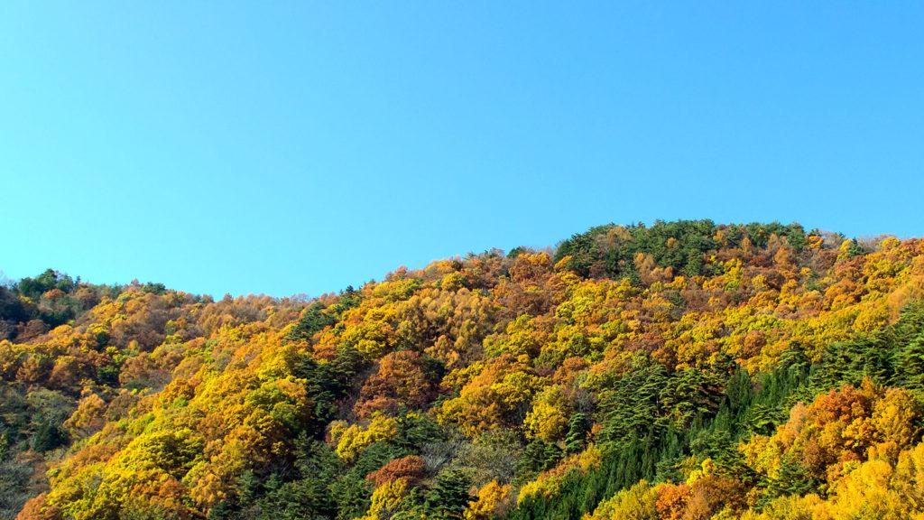 暗峠には温かみのある色合いに染められた紅葉がひろがる