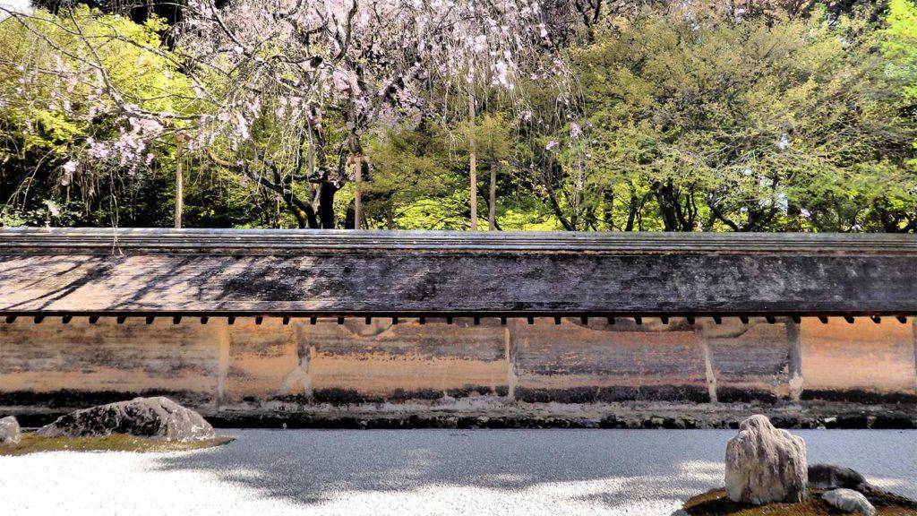 まだ花の少ない石庭 - -京都府の観光、撮影スポット:龍安寺- -