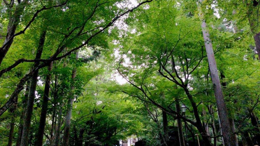 若々しい活気に満ち溢れた緑の境内 - -京都府の観光、撮影スポット:龍安寺- -