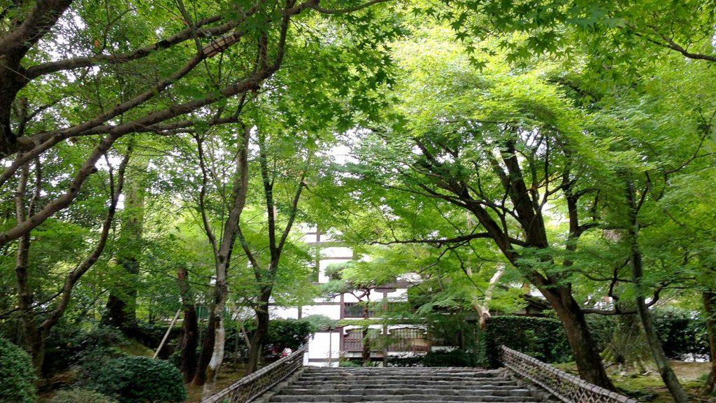 秋には赤く染まる境内も夏には若々しい緑のなか - -京都府の観光、撮影スポット:龍安寺- -