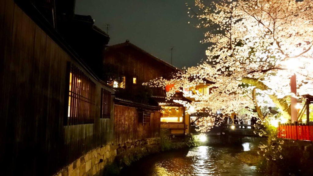 夜のライトの照らされた桜と白川  - -京都、祇園白川- -