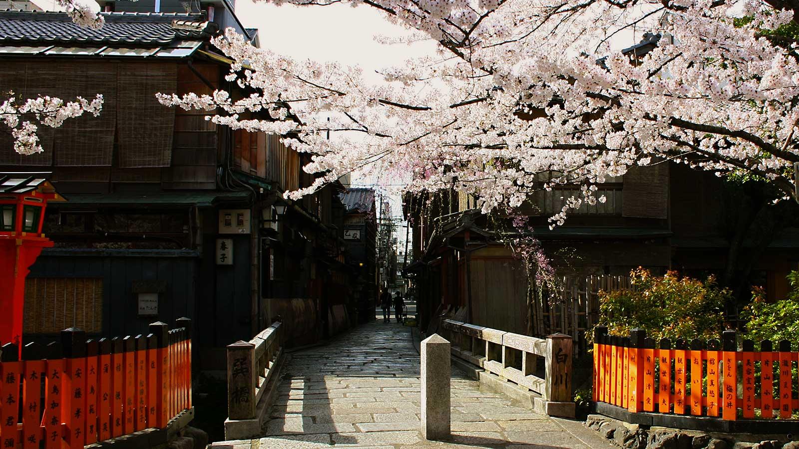 さくらの咲く頃の擬音白川:巽橋 - -京都、祇園白川- -
