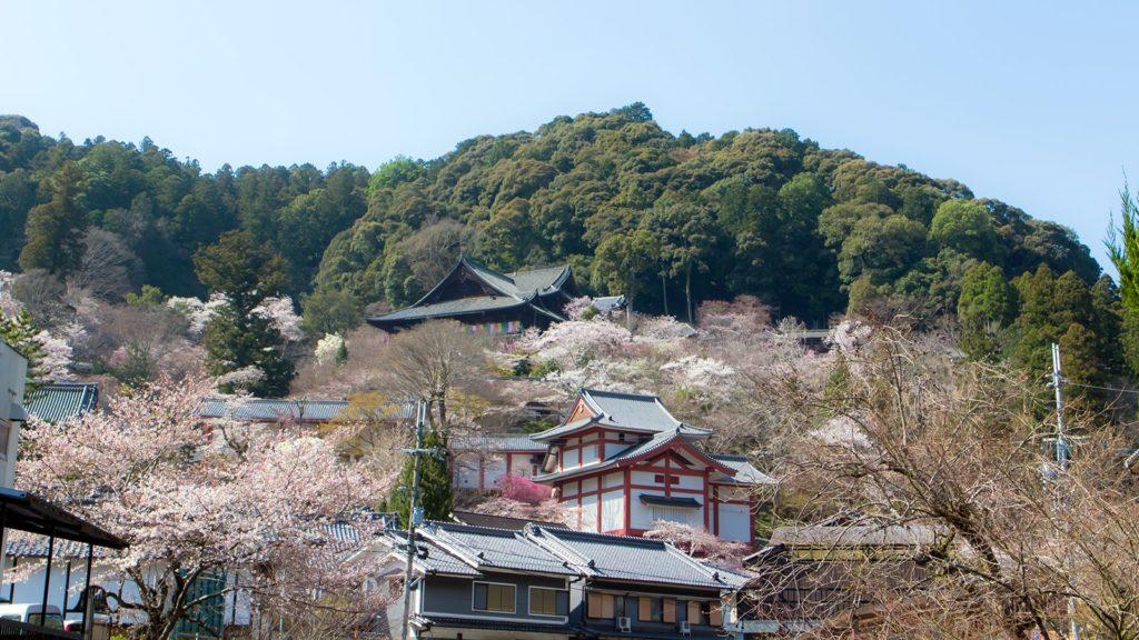 初瀬川の橋から見上げた長谷寺境内の風景 - -奈良県桜井市にある観光、撮影スポット- -