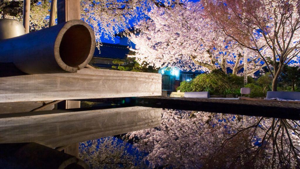 手水鉢の水鏡に映った源空院の夜桜。平日は人もまばらで思う存分に撮影を愉しめる - -愛知県西尾市にある観光、撮影スポット- -
