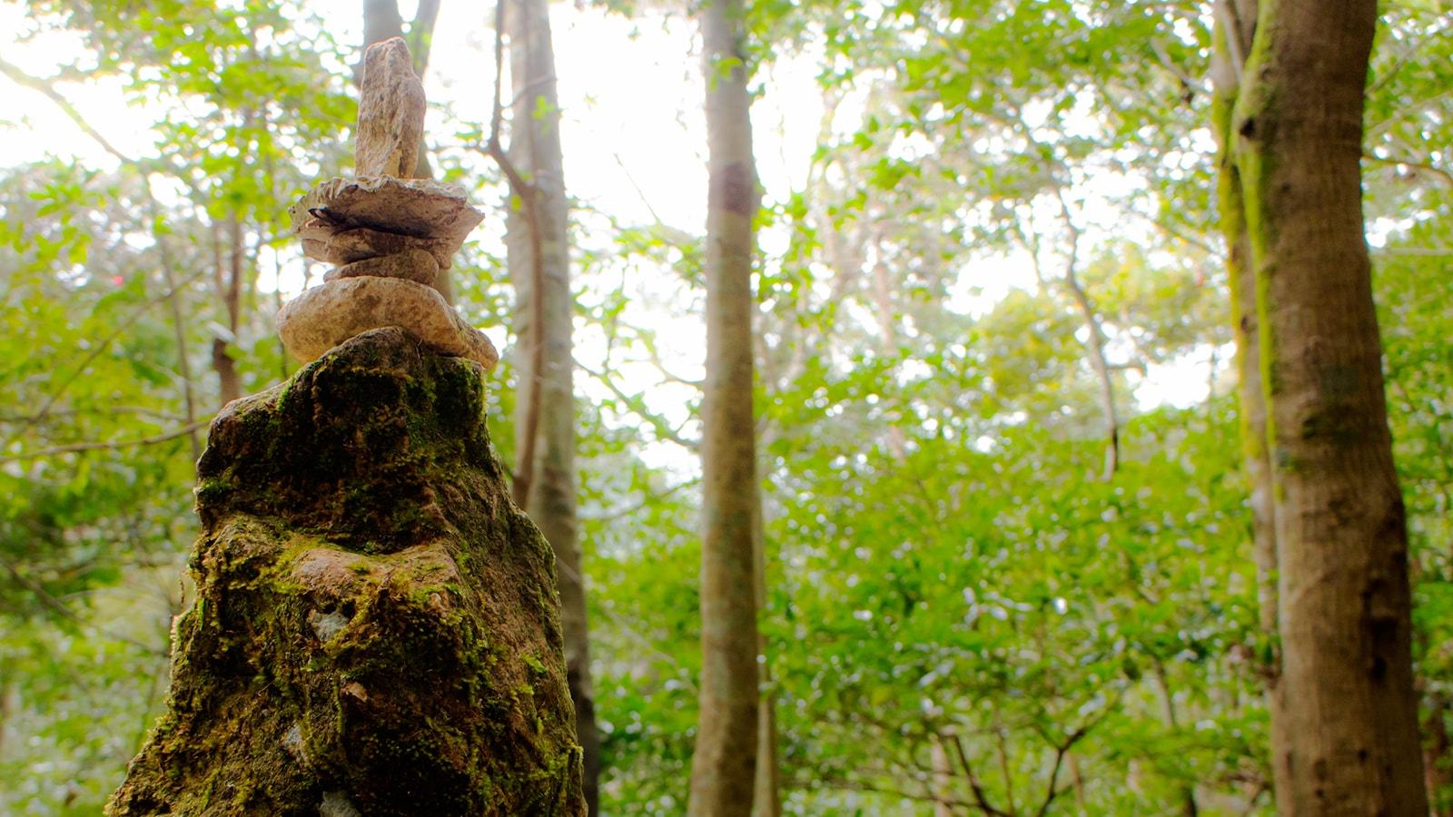 乳岩の周辺には願掛けのために積み上げられた石もおおくある - -愛知県新城市にある観光、撮影スポット- -