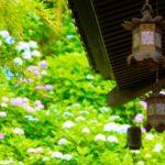 あじさいの花と葉の緑、そして竹の緑、建物が作り出す美しいコントラスト - -神奈川県鎌倉市にある観光、撮影スポット- -
