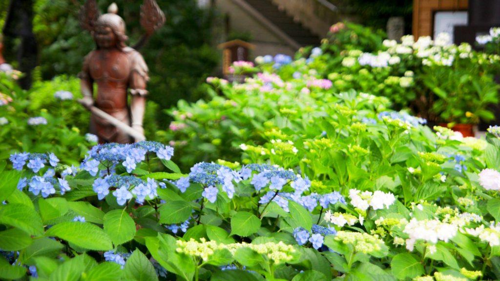 長谷寺の上境内には傾斜を使ったあじさいの風景が広がり、その眺めは絶景のひとこと - -神奈川県鎌倉市にある観光、撮影スポット- -