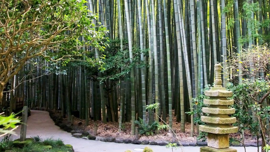 鎌倉、竹の庭:報国寺。竹林の美しさに惹かれ写真を撮りたくなるスポット - -神奈川県鎌倉市にある観光、撮影スポット- -