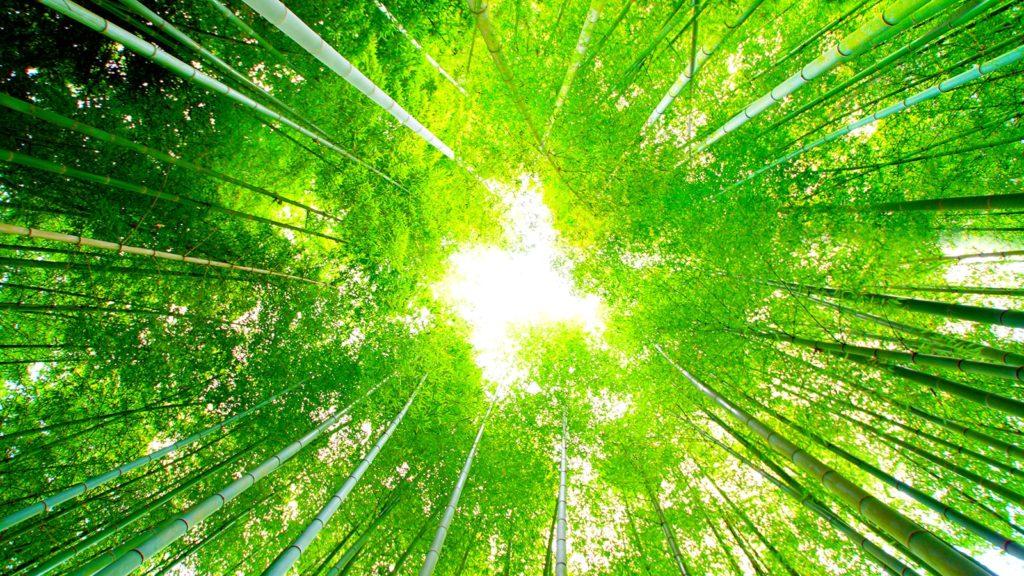 うつくしい緑に包まれる竹林の美しさも愉しめる明月院 - -神奈川県鎌倉市にある観光、撮影スポット- -