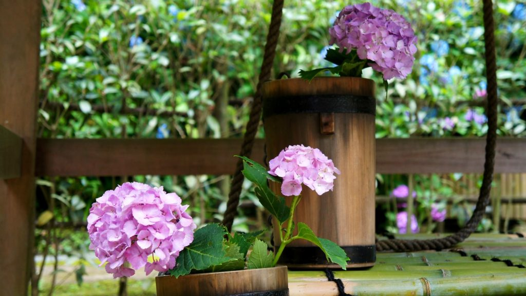 井戸に活けられたあじさいの花:明月院境内 - -神奈川県鎌倉市にある観光、撮影スポット- -
