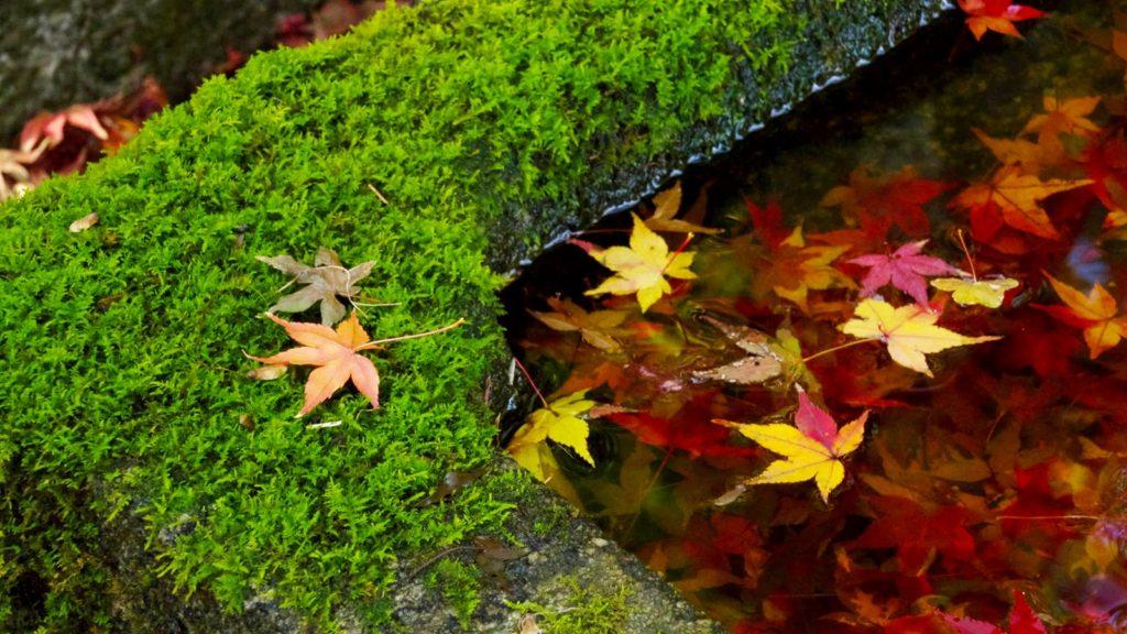 紅葉の時期には錦秋に彩られる矢田寺 - -奈良県大和郡山市にある観光、撮影スポット- -