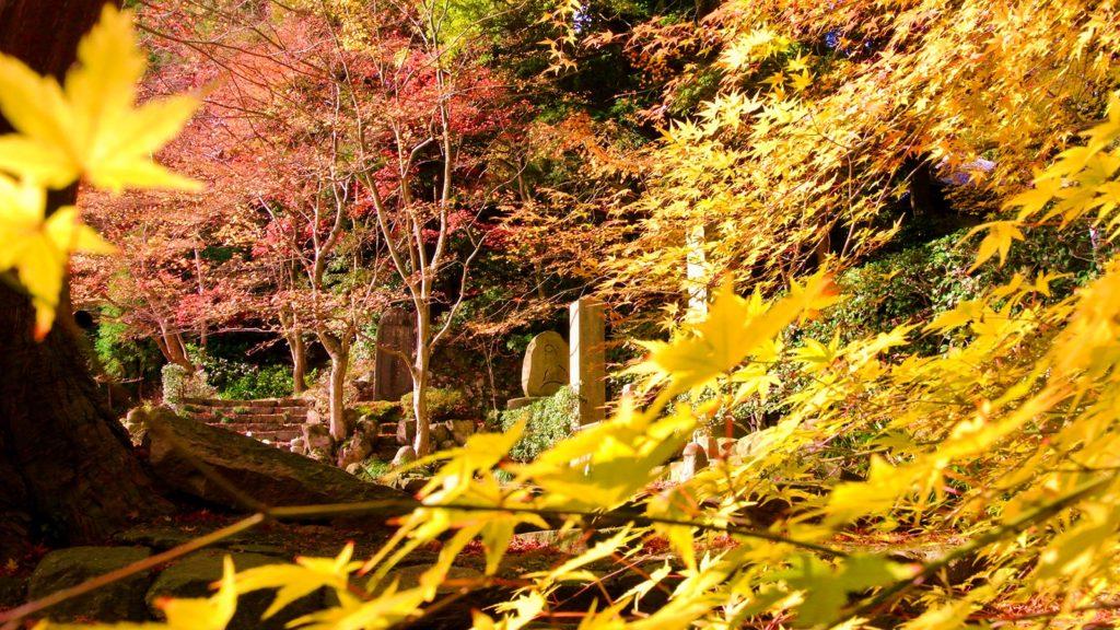 紅葉シーズンにも人気は少なく穴場的な瓦屋禅寺 - -滋賀県東近江市にある観光、撮影スポット- -