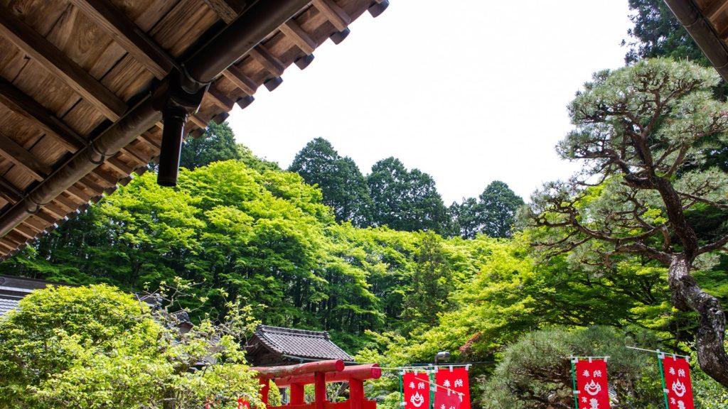 若々しい新緑に包まれる香積寺境内 - -愛知県豊田市にある観光、撮影スポット- -