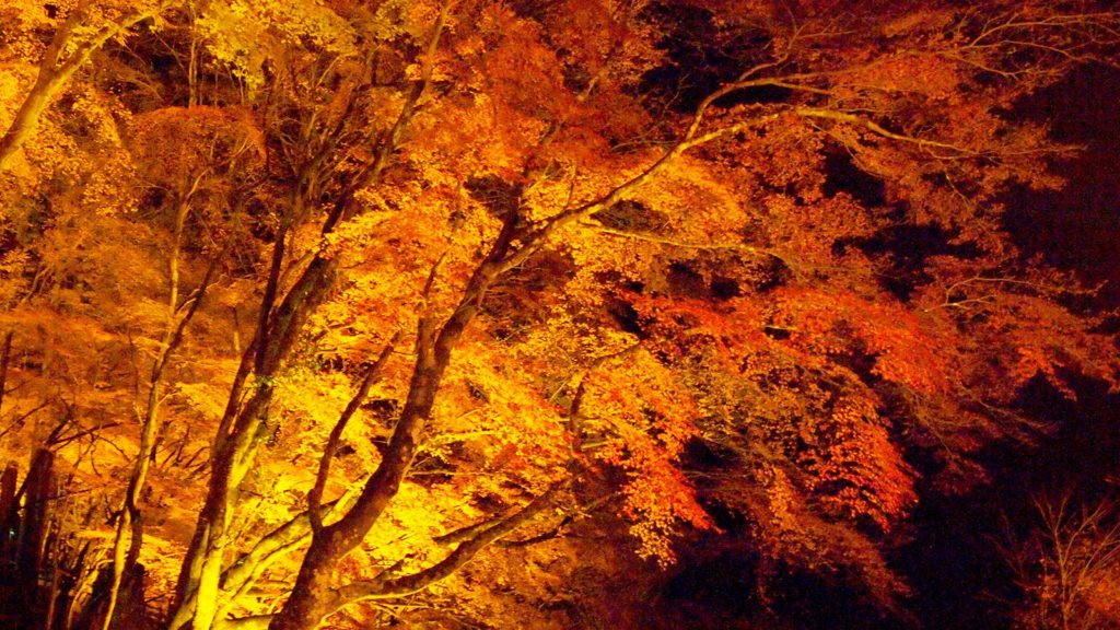 夜間ライトアップされ暗闇に浮かび上がる絶景の香嵐渓 - -愛知県豊田市にある観光、撮影スポット- -