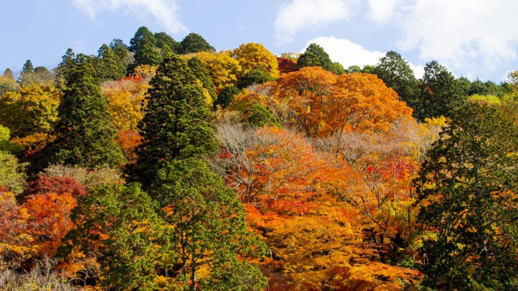 錦秋をまとった飯盛山の風景 - -愛知県豊田市にある観光、撮影スポット- -