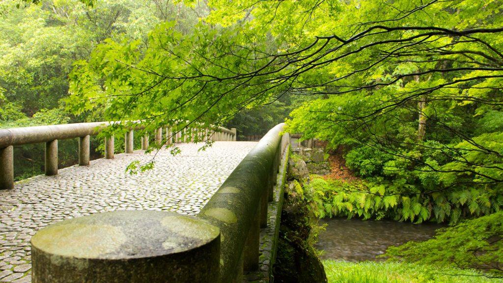 若々しい新緑に彩られた橋 - - 鹿児島県鹿屋市の観光、撮影スポット- -