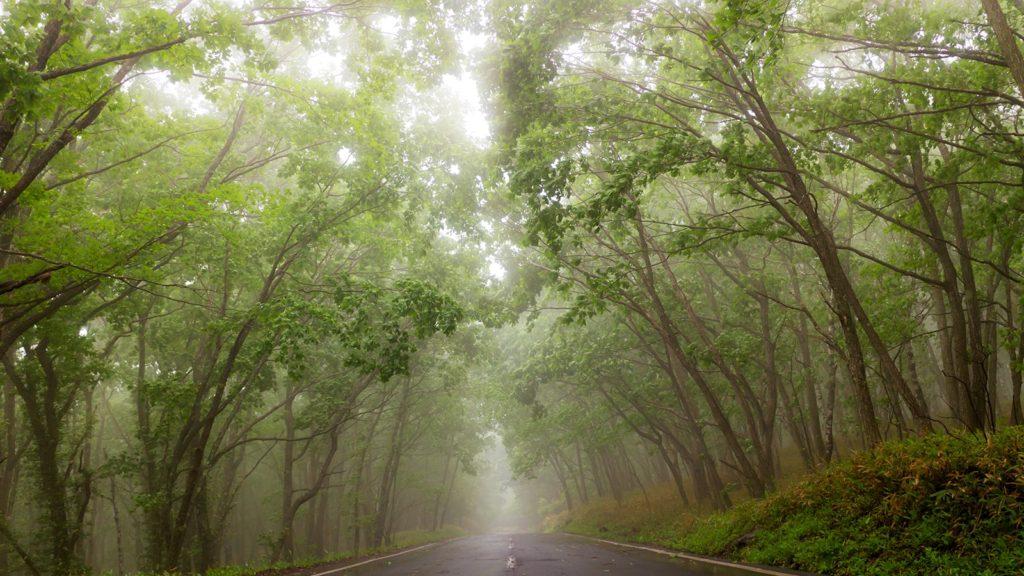 転記の悪い日でも霧に包まれたビーナスラインなど見どころは満載 - - 長野県立科町の観光、撮影スポット- -