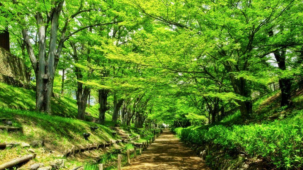 この美しいけやき並木が紅葉するころにも是非、訪れたいと思える上田城  - - 長野県の観光、撮影スポット- -