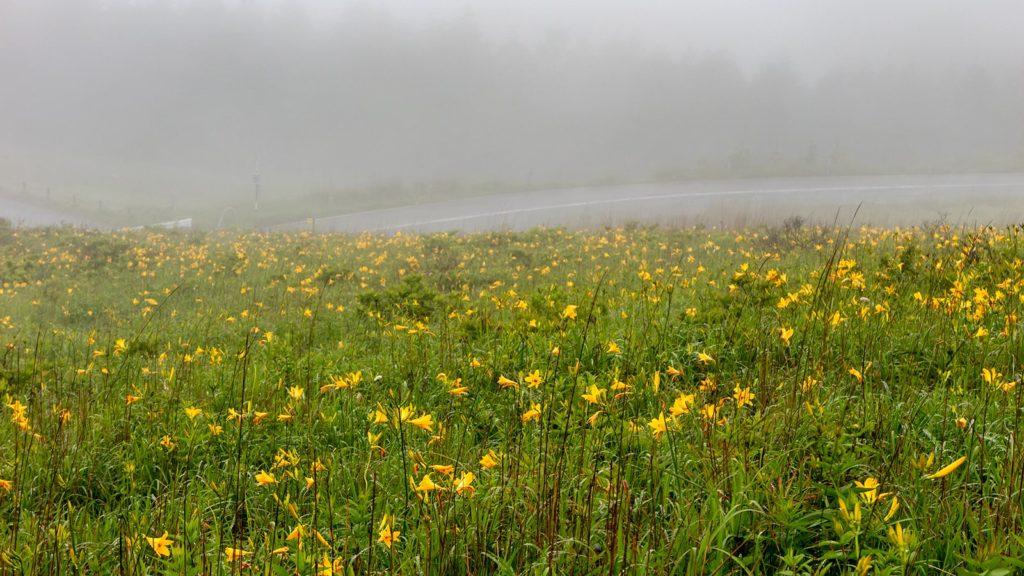 霧ヶ峰の名が示す霧に包まれた幻想的な光景