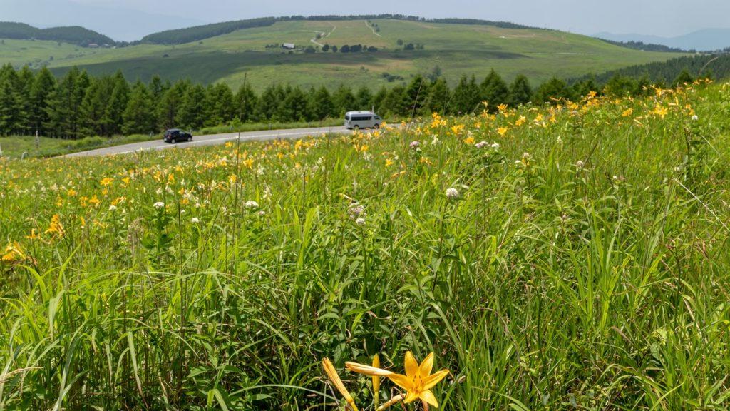 緑の草原の中を走るビーナスラインとニッコウキスゲ