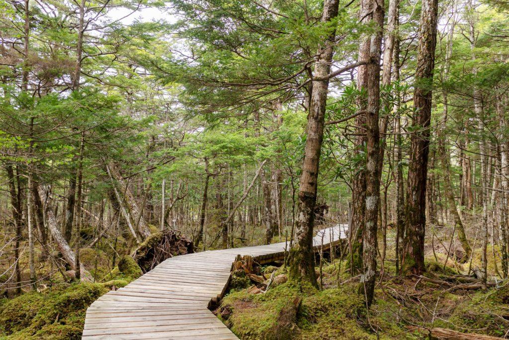 木々と苔の緑に覆われた原生林の中を歩く御泉水自然園