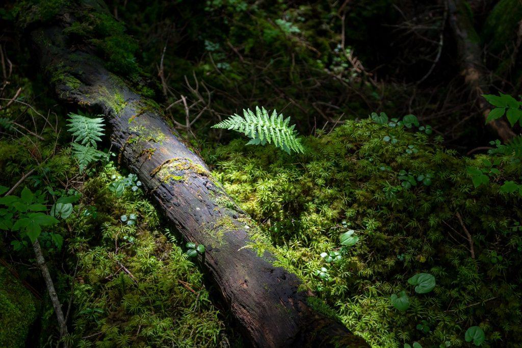 薄暗い中に浮かび上がる天然のスポットライトに照らされた緑