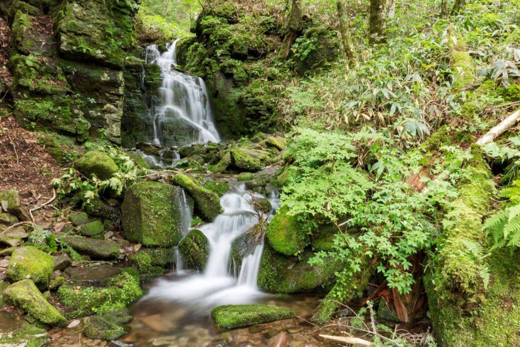 御泉水自然園の奥にあるのがこの蓼仙の滝。