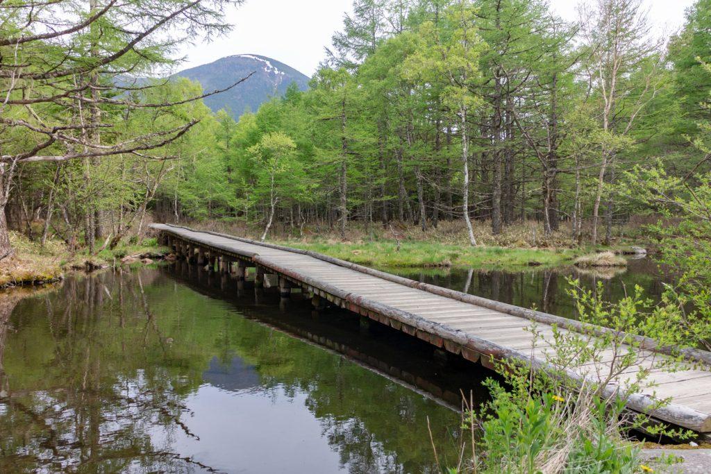 御泉水自然園の湧き水でできた池と蓼科山。