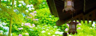 武士の都に花咲かす:長谷寺(神奈川県鎌倉市にある観光、撮影スポット)
