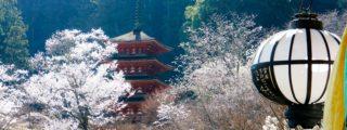 奈良大和路花の寺: 長谷寺 (奈良県桜井市の観光、撮影スポット)